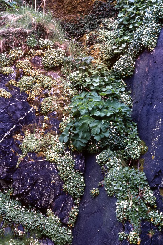 Foliage in a rock cleft - dads pick